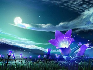 child-shaman-flower-under-night-sky-wallpaper